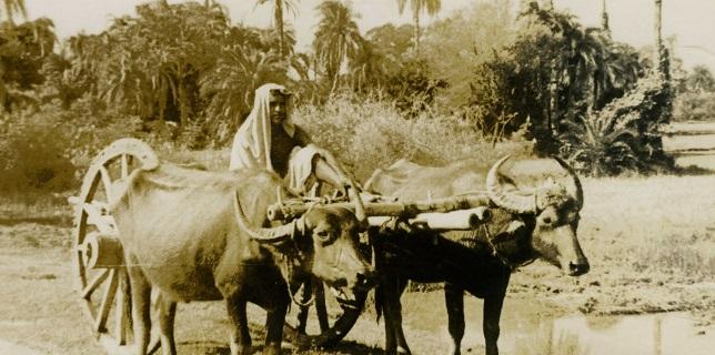 வன்னியில் ஒரு காலத்தில் தன்னிறைவு கொண்டு விளங்கிய மூன்று கிராமங்களின் கதை – பகுதி 14 | மகாலிங்கம் பத்மநாபன்