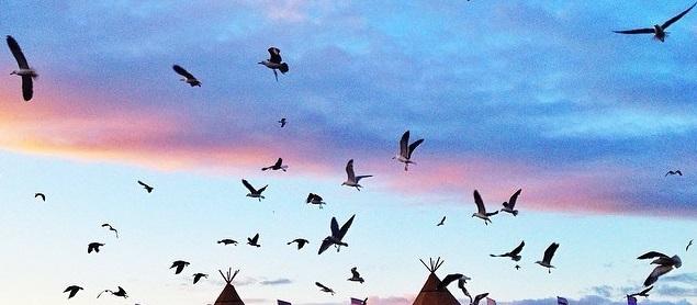 இருபது லட்சத்திற்கும் மேலான இடம் பெயரும் பறவைகள்,சைப்ரஸ் நாட்டில் பலி