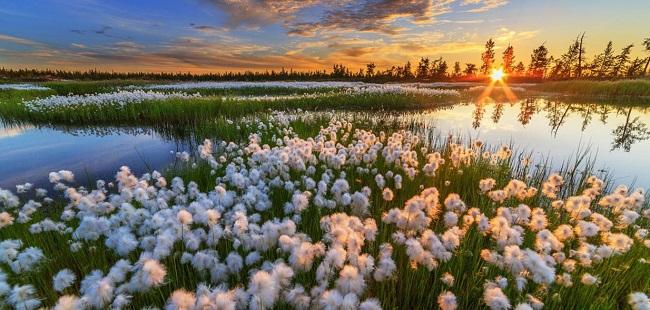 கவிதை | கவிஞர் வைரமுத்து | வெள்ளைப் பூக்கள் உலகம் எங்கும் மலர்கவே!