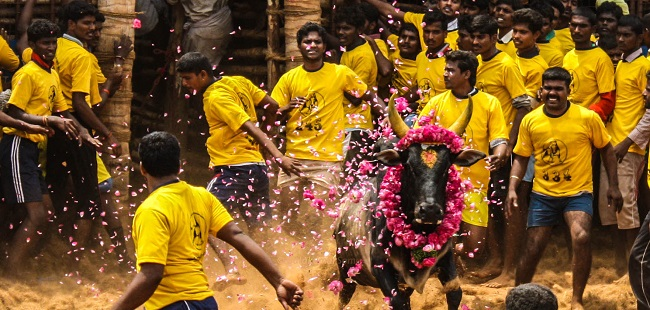 4 கோடி மக்களின் போராடடம் வெற்றி  -நாளை அலங்காநல்லூரில் ஜல்லிக்கட்டு