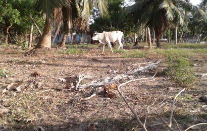 அம்பாறை மாவட்டத்தில் வரட்சியால்  39,421 பேர் பாதிப்பு!